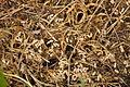 Ant nest near Venford Reservoir (4707).jpg