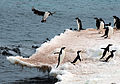 Antarctica 2013 Journey to the Crystal Desert (8370629970).jpg
