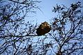 Antz Hive (3650745790).jpg