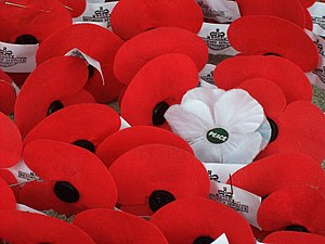 White poppy - Artificial poppies placed as Anzac Day tributes on a cenotaph in New Zealand; mostly papaver rhoeas marketed by the Royal New Zealand Returned and Services' Association, with a lone White Poppy