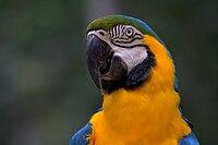 A arara é um animal endêmico do Brasil, que possui uma das mais diversificadas populações de aves e anfíbios do mundo.[150][151]