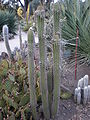Arizona Cactus Garden 042.JPG