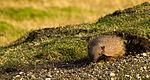 Armadillo in Patagonia.jpg