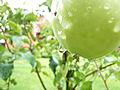 Around the garden (2722278442).jpg