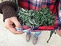 Artemisia princeps 5.jpg
