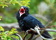 List Of Birds Of Kerala Wikipedia