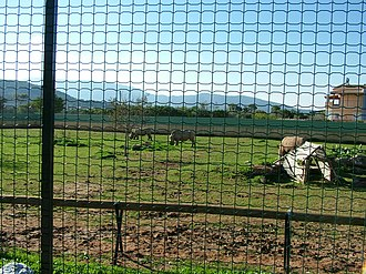 Attica Zoological Park - Some of the animals of the park.