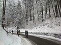 Auf dem Weg nach Neuschwanstein - panoramio.jpg