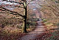 Autumn Path - Ashton - geograph.org.uk - 924503.jpg