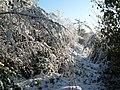 Autumn Snow (2984404235).jpg