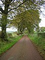Avenue of Trees - geograph.org.uk - 269993.jpg