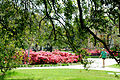 Azaleas on campus (5553701147).jpg