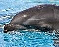 Baby wolphin by pinhole.jpeg