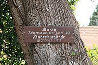 Bad Teinach-Zavelstein - Zavelstein - Krokusstraße - Hindenburglinde 01 ies.jpg