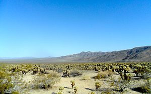 Bajada (geography) -  Bajadas below the Hexie Mountains as seen from Joshua Tree National Park