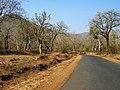 Bandipur Tiger Reserve - panoramio (8).jpg