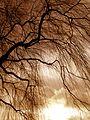 Bare Tree 3.jpg