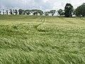Barley field, Watchlaw - geograph.org.uk - 863545.jpg