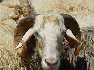 Basco-béarnaise - A basco-béarnaise