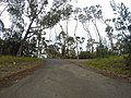 Batehaven NSW 2536, Australia - panoramio (15).jpg