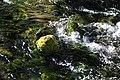 Beaver ponds Kananaskis Alberta Canada (30753056122).jpg