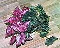 Begonias (hydroponics) 01.jpg