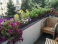 Berlin balcony with flowers.jpeg