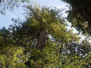 Mendocino Woodlands State Park