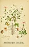 Billeder af nordens flora (1917) (14782492554).jpg