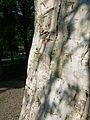 Birch bark lodge, Whitefish Island 7.JPG