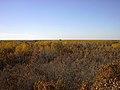 Birds Hill Provincial Park, Manitoba (370518) (9444573628).jpg