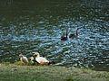 Birds McLaren Lake.jpg