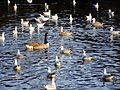 Birds on water.jpg