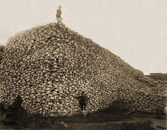 American bison - Pile of American bison skulls to be used for fertilizer in the mid-1870s