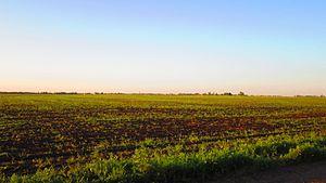 Oka-Don Lowland - Image: Black Earth Field, Pervomaysky District, Tambov