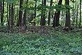Black squirrel distant 4 (1b0a3d1d-632d-4428-9e37-cee304b26c56).JPG