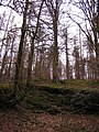 Blakeneyhill Wood South, Forest of Dean - geograph.org.uk - 143737.jpg