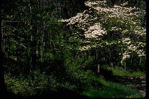 Blue Ridge Parkway BLRI9247.jpg