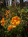Blumen am Gartenzaun – Arboretum Ellerhoop 2.jpg