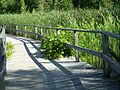 Boardwalk in Ken Reid CA 20080729.jpg