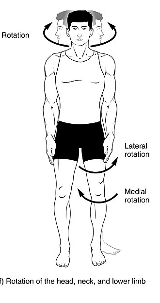 Anatomical terms of motion - Rotation