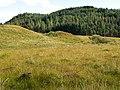 Boggy meadow and woodland, Sandaig - geograph.org.uk - 979836.jpg