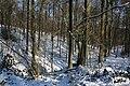 Bois du Pottelberg - Pottelbergbos 29.jpg