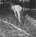 Bosbewerking, arbeiders, boomstammen, gereedschappen, Bestanddeelnr 251-9151.jpg