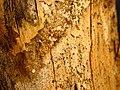 Bosc de Can Deu el 2004 17.jpg