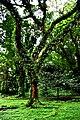 Botanic garden limbe79.jpg