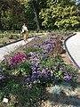 Botanical garden in Zagreb 2021 06 15 39 148000.jpeg