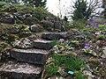 Botanische tuinen Utrecht 11.jpg
