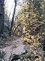 Boynton Canyon Trail, Sedona, Arizona - panoramio (110).jpg