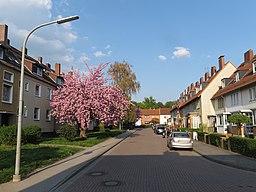 Lindenberg in Braunschweig